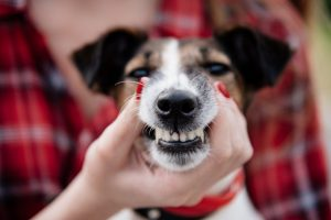 Does My Pet Need a Dental Cleaning?